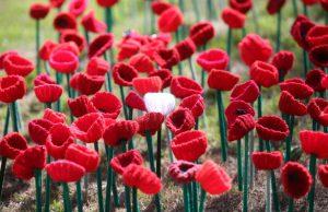 Victoria Park Poppy Project